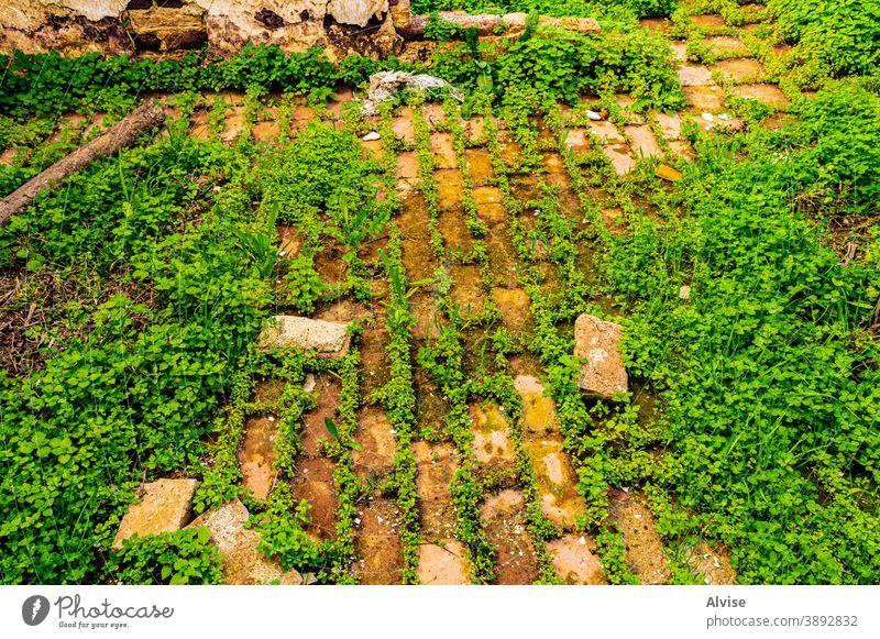Gras und Ziegel Baustein altehrwürdig Hintergrund Wand Muster Architektur Stein Textur retro grün Natur Design natürlich Konstruktion braun Oberfläche Gebäude