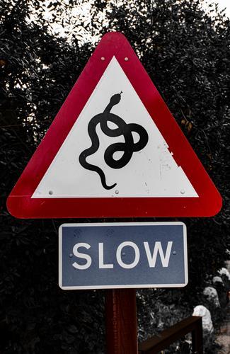 nicht generische Ermahnung auf der Straße Schlange Zeichen Symbol Tierwelt Ikon Design Natur vereinzelt Hintergrund Kunst Kobra weiß Gefahr Reptil Zeichnung