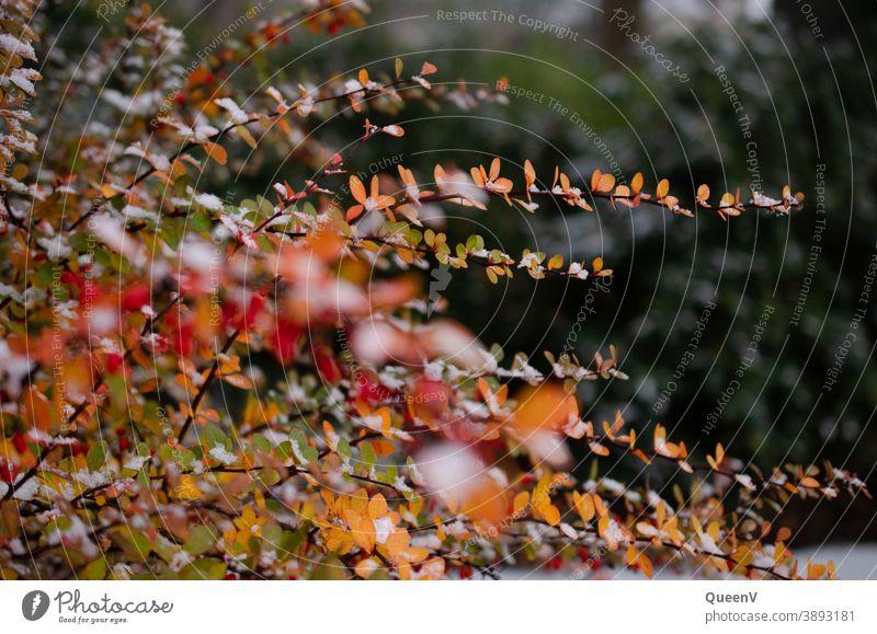 Zweige mit orangen Blätter in Vordergrund und grüne Bäume in Hintergrund Blatt Park Stadtpark Garten Stadtgarten Stadtleben Natur Pflanze Herbst schön