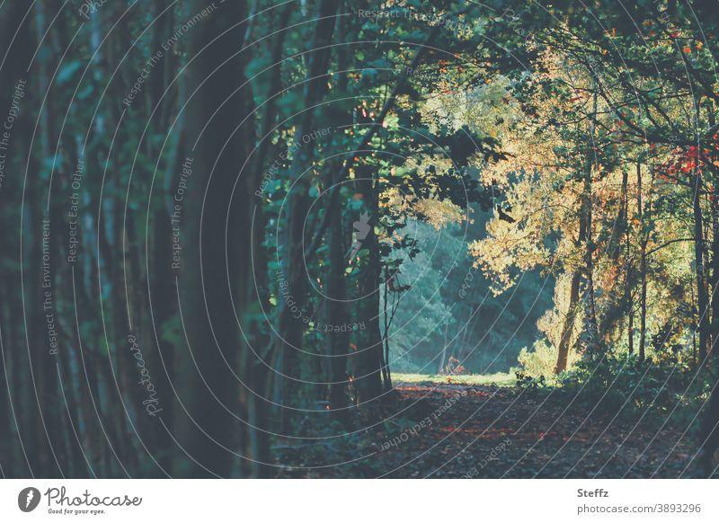 Weg zu einer Lichtung im verwunschenen Wald Waldlichtung Waldweg verwunschener Wald Waldspaziergang Ruhe Oktober dunkelgrün Herbstwald Dunkelfärbung Weg im Wald