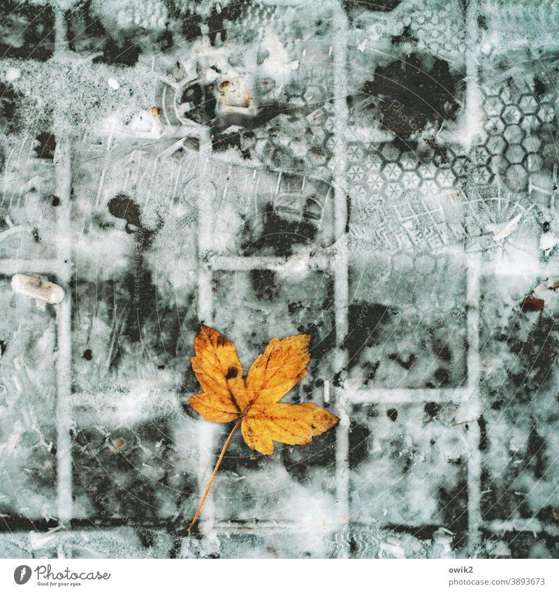 Spuren im Schnee Blatt Umwelt Kontrast Detailaufnahme Nahaufnahme Außenaufnahme Gedeckte Farben Farbfoto Vergänglichkeit alt Bürgersteig Herbstfärbung