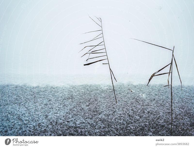 Fastenzeit Winter dünn Schnee geheimnisvoll Außenaufnahme Pflanze Eis gefroren kalt Frost Tag Textfreiraum oben Landschaft Sträucher frieren bizarr Natur Umwelt