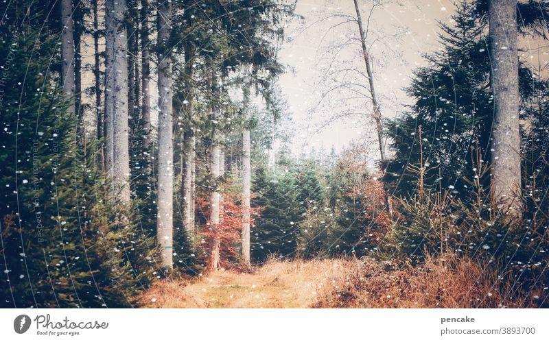 remember november V Wald Herbst Herbstfarben Bäume Laub bunt Schnee Schneeflocken Lichtung Pfad Herbstfärbung Herbstlaub Blätter Herbstlandschaft erster Schnee