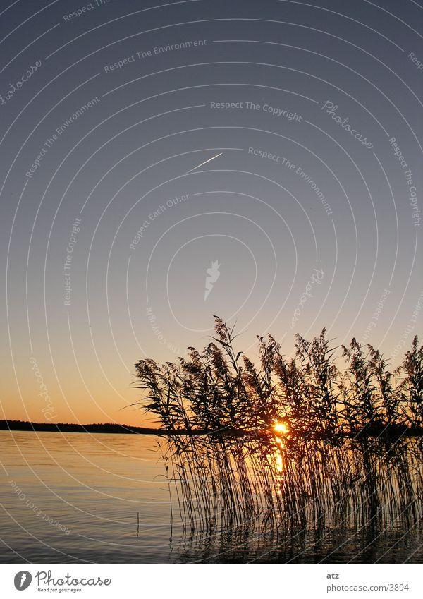 Sonnenuntergang am See durch Schilf Wasser Schilfrohr Schweden Kondensstreifen