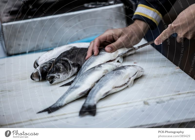 Am Fischmarkt grau Arbeit & Erwerbstätigkeit Lebensmittel Ernährung Gebiss silber Messer Fischer Flosse Schuppen Sushi Italienische Küche Asiatische Küche
