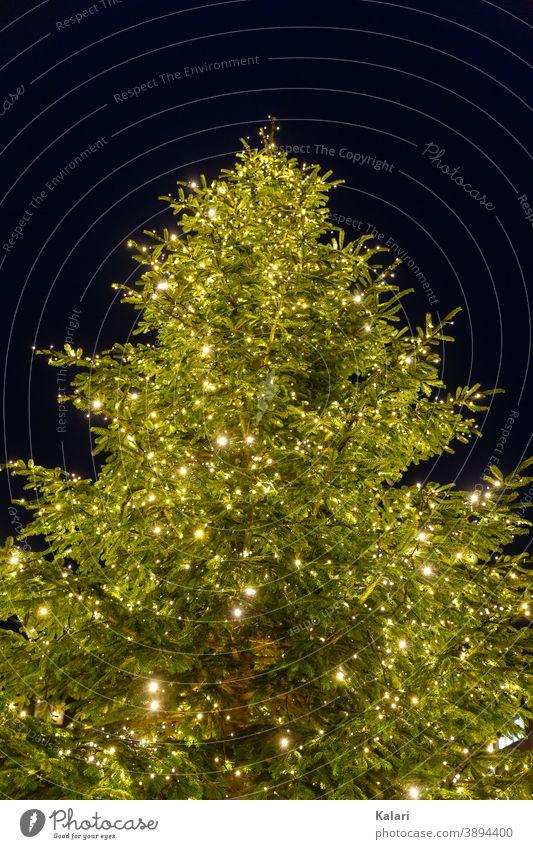Ein Tannenbaum mit Lichterkette leuchtet bei Nacht Weihnachtsbaum weihnachtlich Weihnachtsdekoration Christbaum geschmückt beleuchtet groß Weihnachten festlich