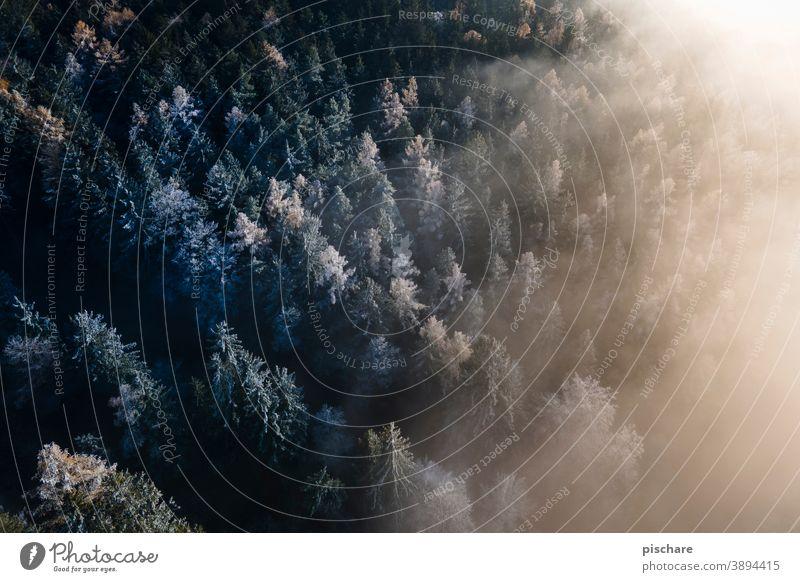 Wald von oben wald nebel bäume baum herbst winter Vogelperspektive kalt Landschaft Natur Außenaufnahme Farbfoto Frost Licht Baum Winter Nebel Herbst Umwelt