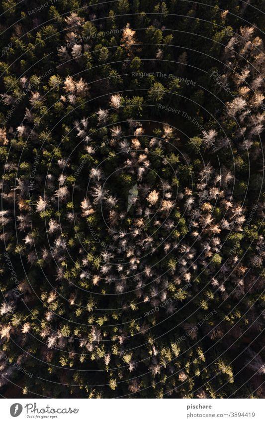 Wald von oben Bäume Natur Vogelperspektive Herbst fliegen hoch Höhe Landschaft Muster Außenaufnahme Umwelt Menschenleer Baum Sonnenlicht grün Farbfoto