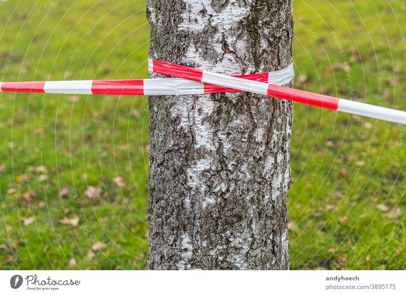 Absperrband an einer Birke mit einer Wiese im Hintergrund grün Zone Sicherheit Begrenzung Gras Verbrechen gestreift Symbol Gegend Linie verboten Barriere rot
