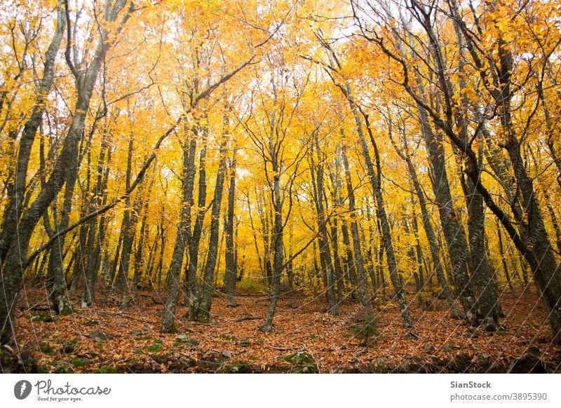 Herbstliche Bäume im Wald, Griechenland fallen Baum Natur gelb Landschaft Blätter Hintergrund schön Park Laubwerk Saison grün orange Licht Sonne rot Farbe
