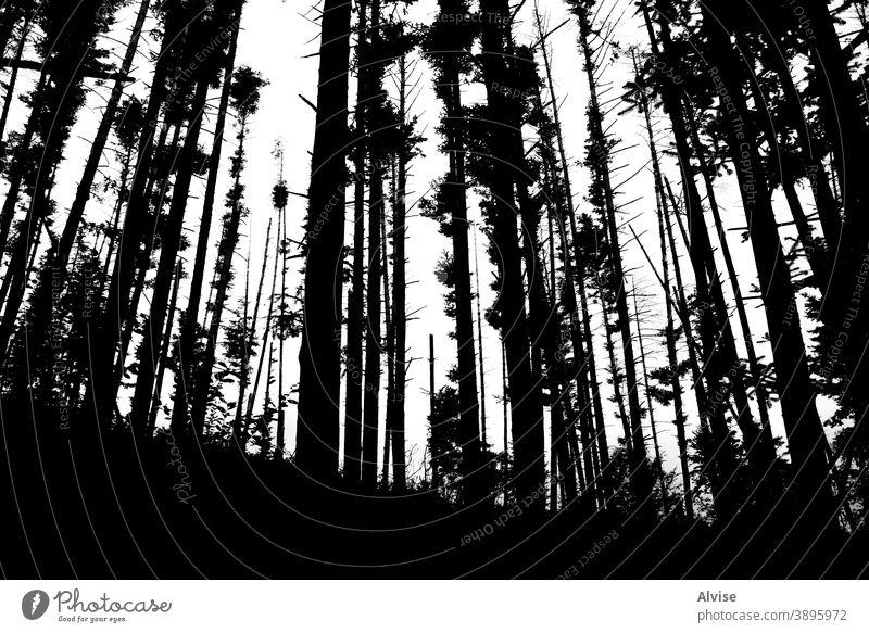 einsame Waldsilhouette Baum Kiefer Feuer Silhouette Natur Holz Landschaft im Freien Flamme natürlich wild Sommer Desaster Hintergrund Design erwärmen Umwelt