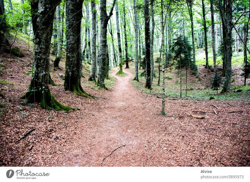 Pfad im üppigen Wald Blatt fallen Weg grün Holz Baum Licht Landschaft Natur Laubwerk Italien Toskana Bäume Europa Kasino Herbst Blätter Wälder magisch