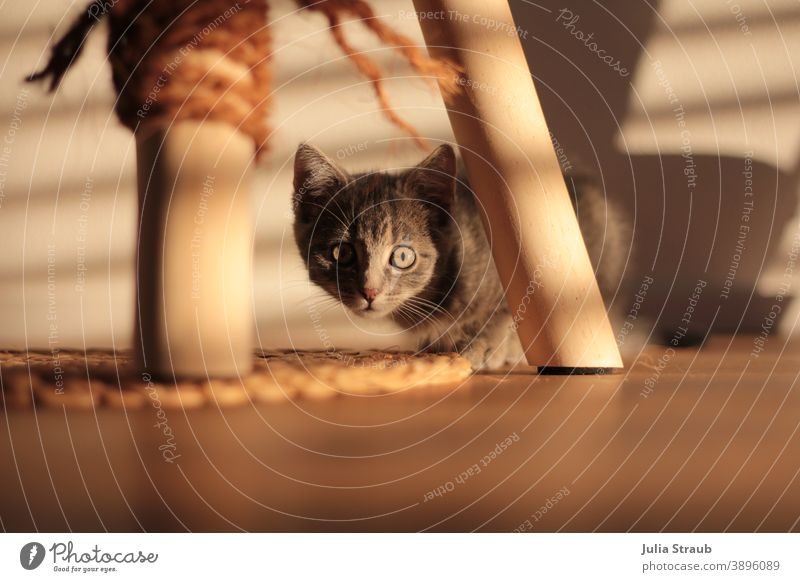 Kleine Katze schaut neugierig im Schattenspiel unter ihrem Kratzbaum daher Katzenbaby Katzenbaum Katzenauge Schatenspiel geflochten Kordel Faden strick