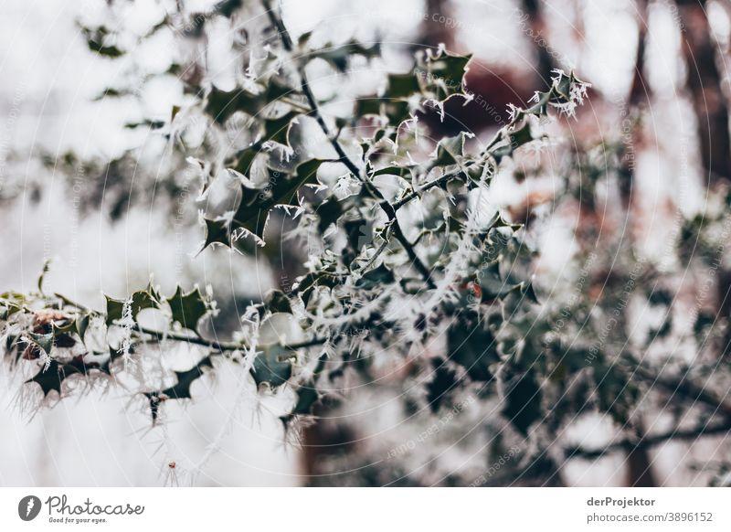 Raureif bedecktes Laub in Wiesbaden gefroren Naturwunder faszinierend Farbfoto Akzeptanz Pflanze Laubbaum Baum Strukturen & Formen Außenaufnahme Umwelt Ausflug