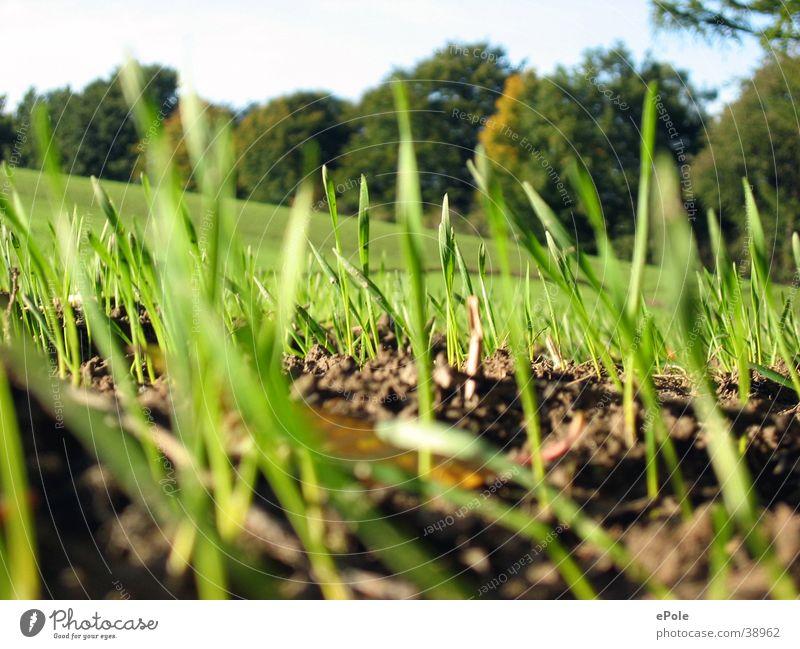 Graswuchs Natur grün Gras Erde