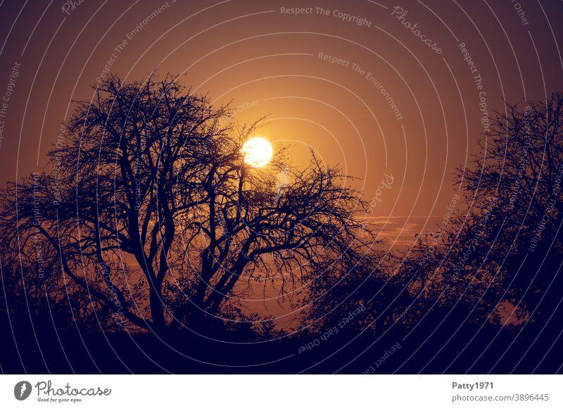 Sonne verschwindet hinter kahlen Bäumen. Gegenlicht Aufnahme. Landschaft Sonnenuntergang Abenddämmerung Silhouette Natur Himmel Dämmerung Außenaufnahme Baum