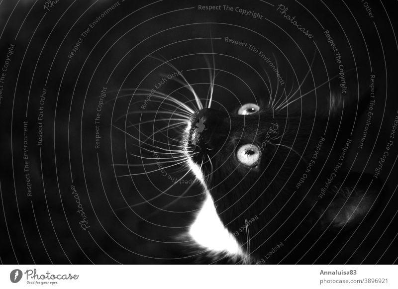 Schwarzer Kater Katze Katzenbaby babykatze kitten schwarz Haustier Schwarzweißfoto Augen Katzenauge süß Liebe kulleraugen kulleräugig Fell Fellfarbe Tierporträt