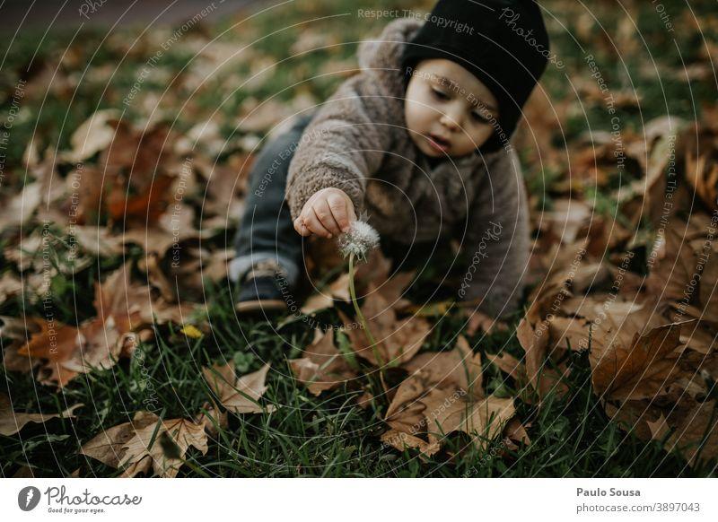 Kleinkind spielt mit Löwenzahn auf Herbstblättern authentisch Herbstlaub herbstlich Winter fallen Farbfoto Kind Herbstwald Herbstwetter Blatt Außenaufnahme