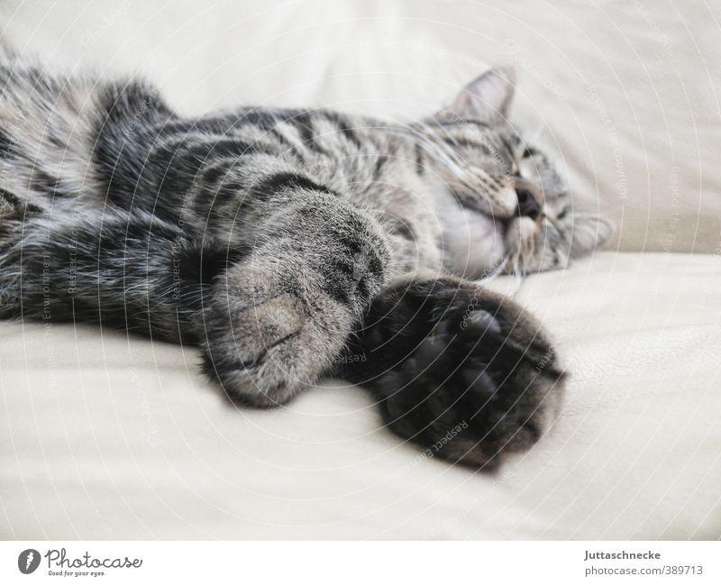 Affenhitze Katze schön Erholung ruhig Tier Tierjunges grau liegen Freizeit & Hobby schlafen Sicherheit Pause Fell Gelassenheit Müdigkeit Haustier