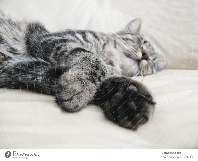 Affenhitze Tier Haustier Katze Fell Krallen Pfote 1 Tierjunges Erholung liegen schlafen grau Sicherheit Geborgenheit Tierliebe ruhig bequem Freizeit & Hobby