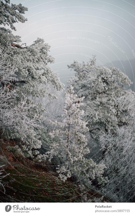 #A0# Winterwald am winterwalden Winterurlaub Winterstimmung Wintertag Winterlicht winterlich Schnee Rauhreif Kälte Bäume Natur Phänomen Naturphänomene Frost