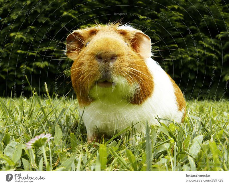 Der Herr Karl grün weiß Erholung Freude ruhig Tier Gras lustig Freiheit braun Zufriedenheit niedlich Pause Lebensfreude Neugier Wachsamkeit