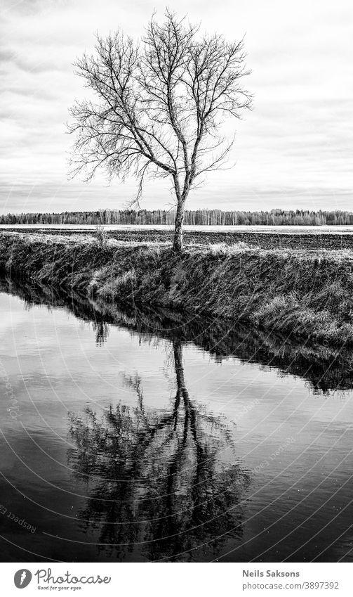 letzter Baum am Flussufer, Reflexion abstrakt Herbst Hintergrund hintergrundbeleuchtet schön Schönheit blau Ast Niederlassungen hell Land Umwelt Wald frisch