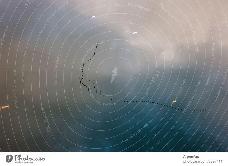 Inklusion Kranich Kraniche am Himmel Wasser Spiegelung Spiegelung im Wasser Wolken Reflexion & Spiegelung Menschenleer Vögel Formationsflug Vogel Wildtier