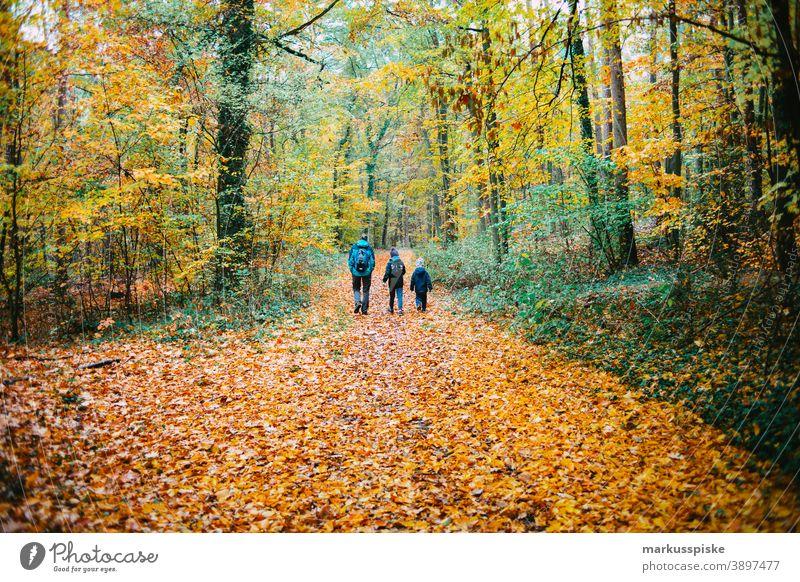 Herbst-Laubwald Bayern Biotop Niederlassungen Wolken Konifere laubabwerfend ökologisch Ökosystem Umwelt Tanne Wald Gras grün Boden Lebensraum Hügel Horizont