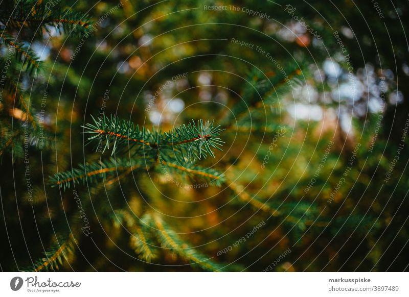 Tannenbaum Ast Bayern Biotop Niederlassungen Wolken Konifere laubabwerfend ökologisch Ökosystem Umwelt Wald Gras grün Boden Lebensraum Hügel Horizont idyllisch