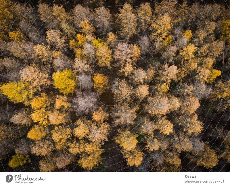 Herbstwald von oben Wald Bäume Natur Landschaft Pflanzen Baum Umwelt Außenaufnahme grün Farbfoto Menschenleer Tag orange gold Luftbild Luftbildfotografie Muster