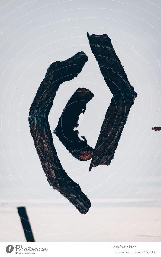 Spiegelung eines Baumes in einem brandenburgischen See Trauer Abschied Gedeckte Farben Kontrast Textfreiraum unten Textfreiraum oben Textfreiraum links