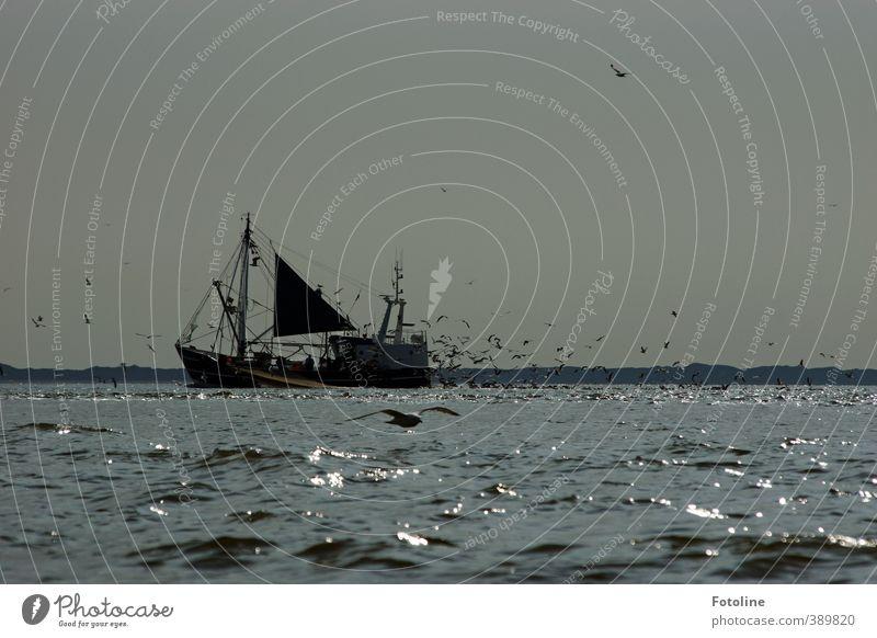 Kutter ahoi! Himmel Wasser weiß Meer Tier schwarz kalt Küste grau hell Wasserfahrzeug Vogel Wellen groß frei nass