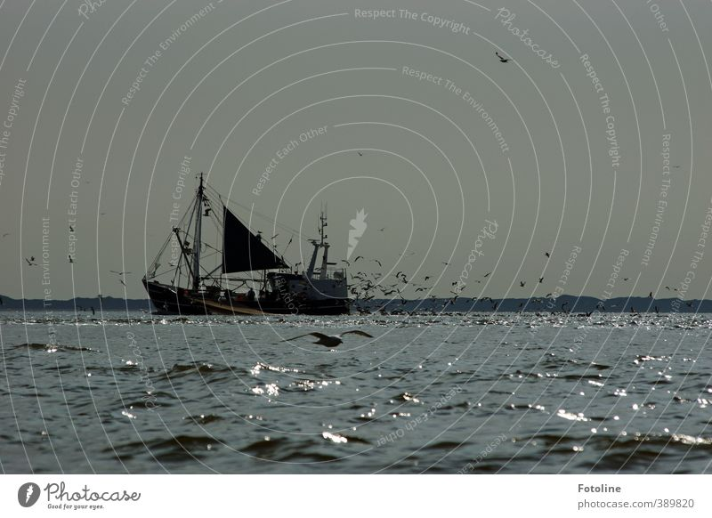 Kutter ahoi! Wasser Himmel Wolkenloser Himmel Wellen Küste Nordsee Meer Tier Vogel Schwarm frei groß Unendlichkeit hell kalt nass grau schwarz weiß