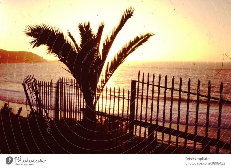 Blick auf Palme, Zaun und das Meer bei Sonnenuntergang retro schäbig golden romantisch Sonnenuntergangslicht Sonnenaufgang Sonnenuntergangshimmel Abendstimmung