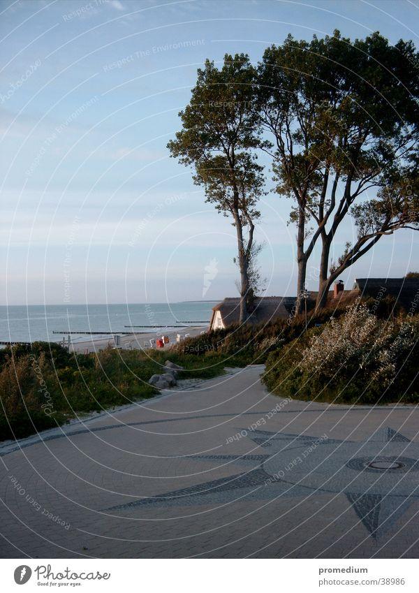 Ahrenshoop Baum Strand Wind Stranddüne Ostsee Klippe