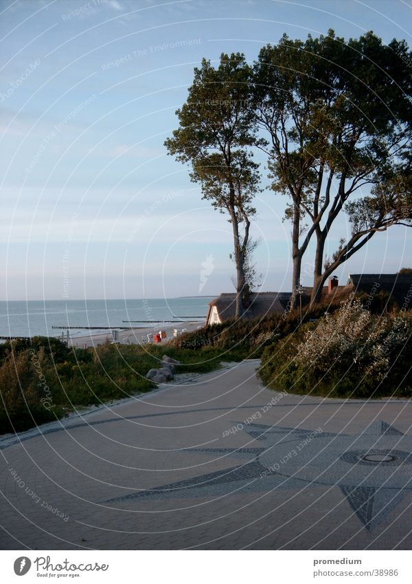 Ahrenshoop Strand Klippe Baum Ostsee Hans am Grenzweg Stranddüne Wind