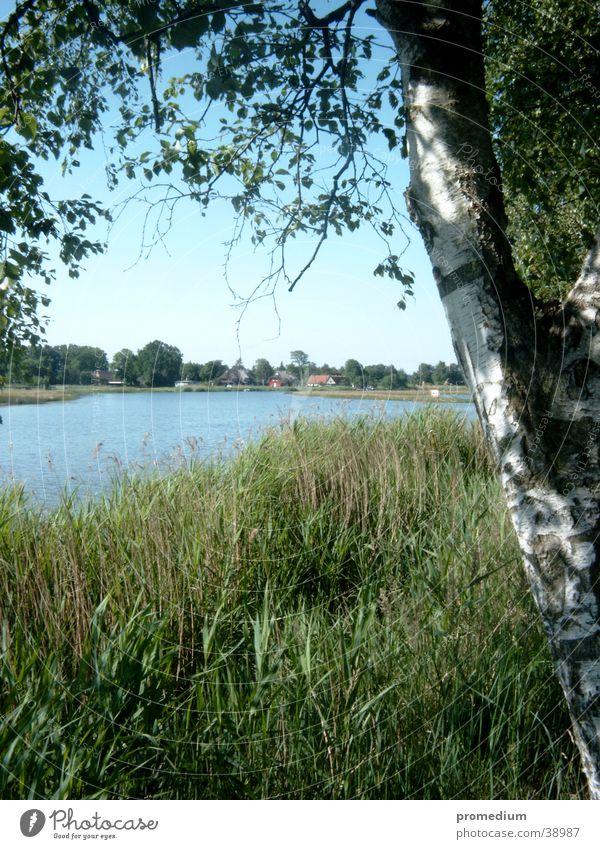 Prerow Natur Sonne Ferien & Urlaub & Reisen Europa Schilfrohr Ostsee Blauer Himmel Mecklenburg-Vorpommern Vorpommersche Boddenlandschaft