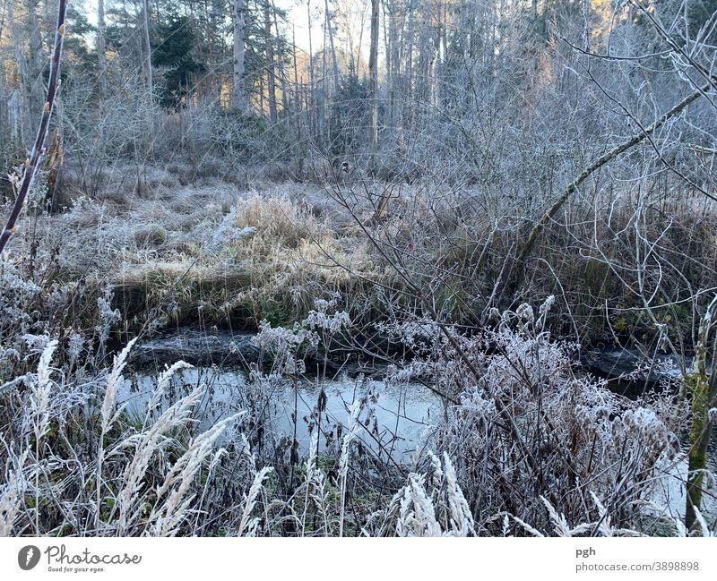 Morgenspaziergang mit Raureif Raureif am Morgen Bach Sumpf Herbst Winter Schilff Gräser Wald Starnberger See Moor