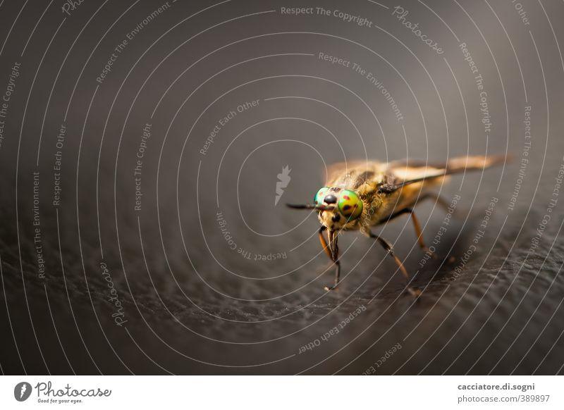 little monster Tier Wildtier Fliege 1 krabbeln Aggression außergewöhnlich bedrohlich exotisch frech gruselig klein Neugier rebellisch verrückt braun mehrfarbig