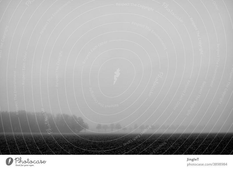 eingeschränkter Horizont Schwarzweißfoto Nebel Linie Feld Baum Bäume Wald Waldstück Himmel Wolkendecke Natur Landschaft Außenaufnahme Umwelt Menschenleer kalt