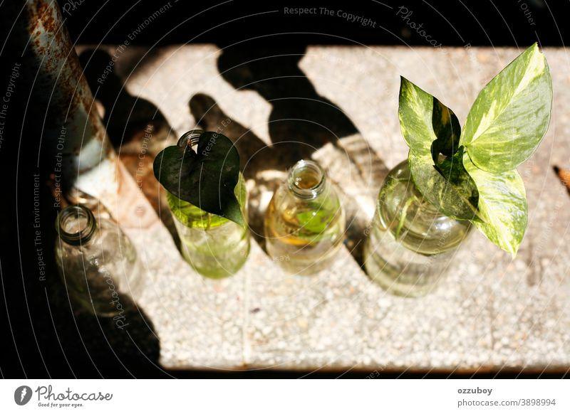 Flaschenvase mit Pflanzen Vase Dekoration & Verzierung Farbfoto Innenaufnahme Tag Häusliches Leben Blatt Menschenleer ästhetisch Innenarchitektur