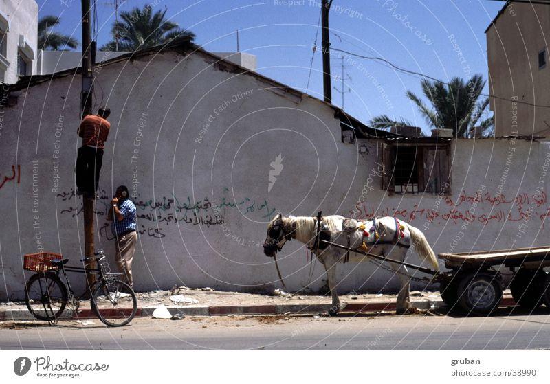 Telefonarbeiten, Gaza 1995 Mann Wand Fahrrad Schönes Wetter Pferd Klettern Telefonmast Reparatur Israel Karre Naher und Mittlerer Osten Tier Pferdefuhrwerk