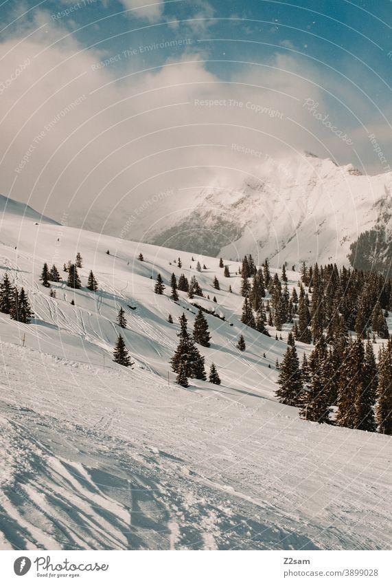 Winterlandschaft im Südtiroler Ratschings ratschings Bäume Wald Schafe skipiste Berge alpenländisch Wintersport südtirol Urlaub italienisch Landschaft Ferien
