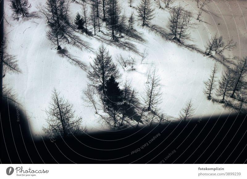 Bäume im Schnee von oben Winter verschneite Nadelbaum Forstwald Forstwirtschaft Wald Fichtenwald Grünfläche grün Pflanze Baum Tanne Natur Umwelt Tannenbäume