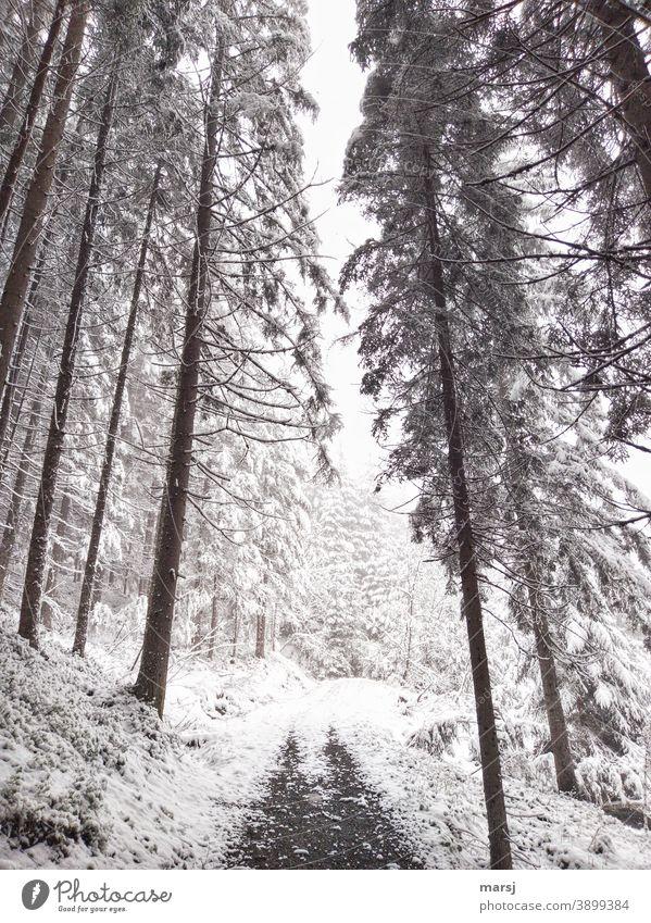 Winterlicher Wanderweg im Fichtenwald. Bedrohlich stürzende Linien. Winterstimmung Wintertag kalt Natur Winterzauber winterlich Schnee Wanderwege Spazierweg