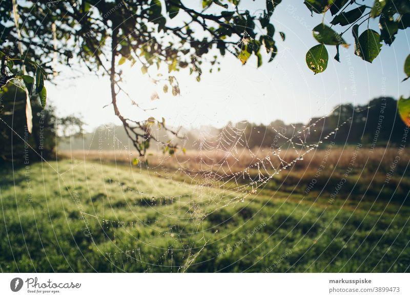 Herbst Laubwald am Morgen mit Spinnennetz Bayern Lebensraum Tochtergesellschaften Wolken Konifere laubabwerfend ökologisch Ökosystem Umwelt Tanne Wald Gras grün