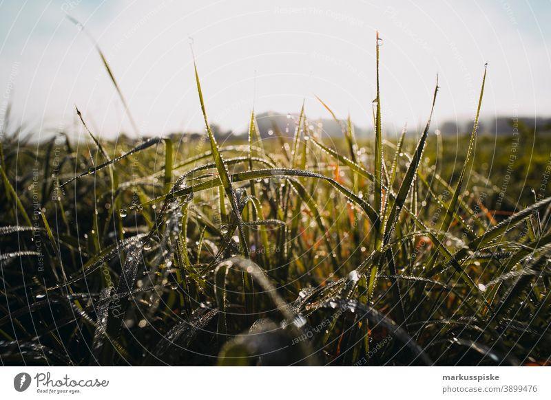 Herbst Bereich Land Gras in den Morgen Morgentau Bayern Lebensraum Tochtergesellschaften Wolken Konifere laubabwerfend ökologisch Ökosystem Umwelt Tanne Wald