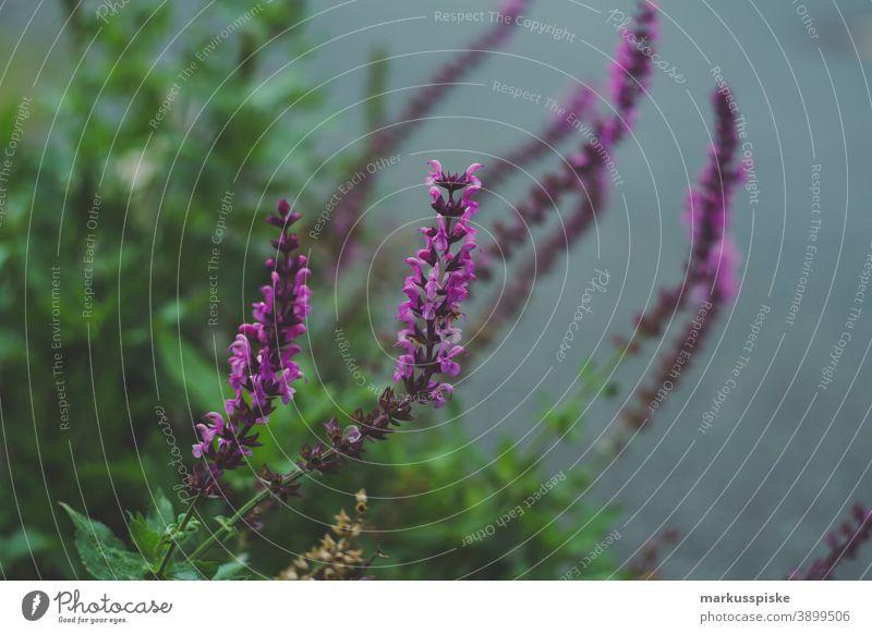 Haus Garten Lila Blume schön Schönheit Farbenpracht Blütezeit Bokeh hell braun Haufen Nahaufnahme farbenfroh Landschaft Phantasie Flora geblümt Blumen