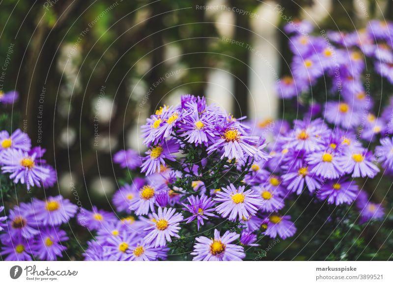Haus Garten Blume schön Schönheit Farbenpracht Blütezeit Bokeh hell braun Haufen Nahaufnahme farbenfroh Landschaft Phantasie Flora geblümt Blumen